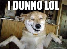 retarded dog