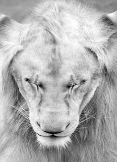 #lions Tiny Particles of Larger Loves