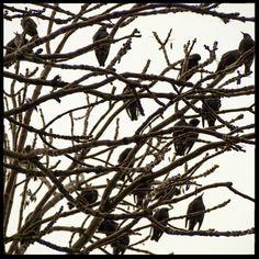 Flock of sparrows ©2013   Photography A. de Boer