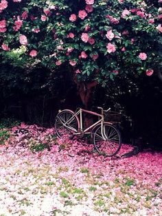 Gorgeous setting for this 2 wheel ride-upon that I wish I could find a comfortable fitting seat for.