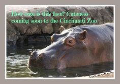 cincinnati zoo memorial day weekend