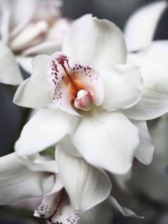 orchid love - can't ever have enough