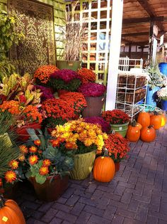 mums- the only way to bring fall colors to TX