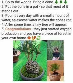Garden Terrarium, Garden Plants, Indoor Plants, House Plants, Lifehacks, Container Gardening, Gardening Tips, Plant Care, Dream Garden