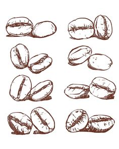 80% Off Sale Coffee bean Hand drawn vector, sketch of coffee beans. Hand drawn…