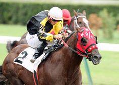 23 Best Oscar Delgado Images Hialeah Park American Quarter Horses
