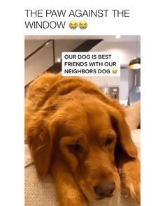 Officially emotionally invested in two dogs relationship Via insta: - Funny Dog Quotes - Officially emotionally invested in two dogs relationship Via insta:Dani Austin Cute Funny Dogs, Cute Funny Animals, Cute Dog Memes, Cute Animal Videos, Cute Animal Pictures, Funny Pictures, Animal Jokes, Funny Animal Memes, Cute Dogs And Puppies
