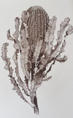 Banksia Menziesii by Jeanette Giroud. Paintings for Sale. Bluethumb - Online Art Gallery