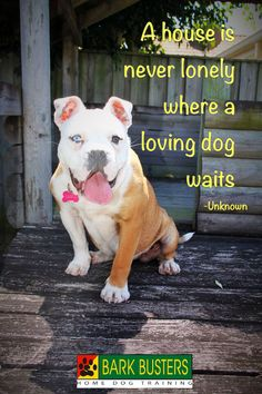 A house is never lonely where a loving dog waits.  -Unknown