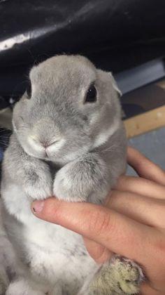 So fluffy looking. Eeee