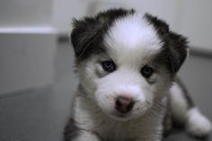 ITAP of my friend's new dog Duke http://ift.tt/2i1gpTs
