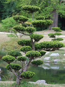 27 Pretty Backyard Lighting Ideas for Your Home - The Trending House Topiary Garden, Topiary Trees, Garden Trees, Garden Paths, Garden Art, Garden Landscaping, Asian Garden, Cloud Pruning, Outdoor Garden Lighting