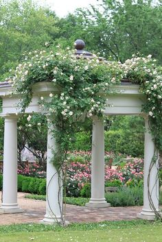 Pergola - like how they have plants starting half way up column.