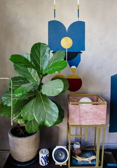 Plant-o-Pedia: Fiddle Leaf Fig