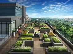 Green Architecture, Architecture Concept Drawings, Architecture Details, Rooftop Terrace Design, Rooftop Garden, Landscape Design Plans, Garden Design Plans, Roof Garden Plan, Modern Landscaping