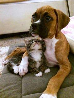 Animales  graciosos , bonitos  ,  tiernos . En todas sus variedades y razas, con comportamientos y gestos que nos resultaran familiares...