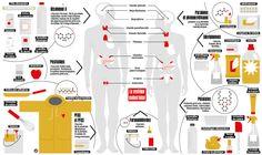 Pertirbateurs endocriniens,   urgence dans nos placards    Les perturbateurs endocriniens (infographie BiG)  Les perturbateurs endocriniens (infographie BiG)