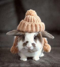 rabbit winter wear
