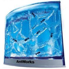 dorm pet idea 2: ants