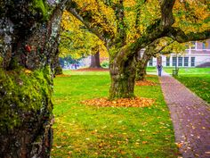 Fall Colors at the University of Washington!