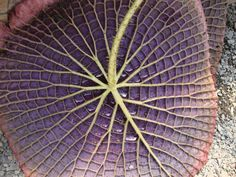 The 5 Great Biomimicry Applications Series - Plants 4
