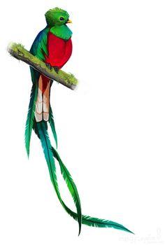 Resplendent Quetzal by *CoyoteMange on deviantART