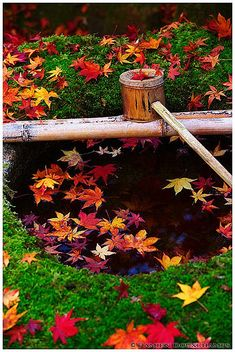 Fall maple leaves, Koto-in, a sub-temple of Daitoku-ji, Kyoto, Japan