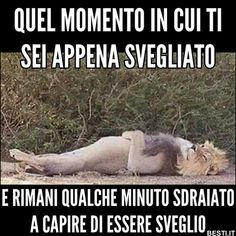 Funny Video Memes, Really Funny Memes, Funny Jokes, Funny Images, Funny Photos, Verona, Funny Chat, Italian Memes, Savage Quotes