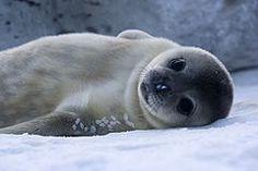 Antártida - Wikipedia, la enciclopedia libre