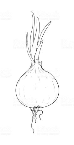 onion hand drawn painting vector line art illustration royalty-free onion hand drawn painting vector line art illustration stock vector art & more images of art Simple Line Drawings, Easy Drawings, Ink Illustrations, Illustration Art, Onion Drawing, Vegetable Coloring Pages, Vegetable Drawing, Fruit Painting, Wall Drawing