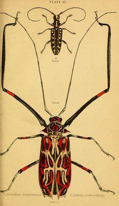 The natural history of beetles Edinburgh :Henry G. Bohn,1852.