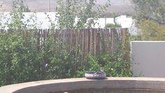 birds feeding Prince Albert, Bird Feeders, Birds, Plants, Bird, Plant, Planets, Teacup Bird Feeders