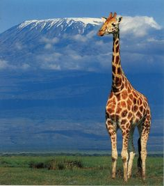 Mount Kilimanjaro - already have seen it but now I want to climb it! 2015!