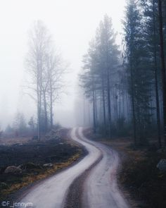 Foggy winter in Sweden. Copyright Jenny Mårtensson