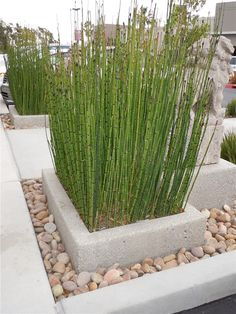 garden design - Garden And Lawn , Concrete Garden Planters Concrete Planters With Rocks Concrete Garden, Concrete Planters, Garden Planters, Cement, Horsetail Reed, Snake In The Grass, Easy Plants To Grow, Peat Moss, Perfect Plants