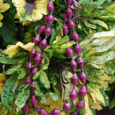 """""""Purple Eggplant"""" – Long Necklace...lots of other colors on site for Village of Hope, Uganda"""