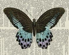 butterflies, butterflies...I love butterflies!