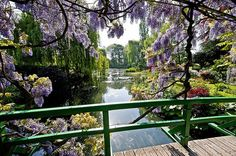 Famous Wisteria of Monet's Garden in Giverny, France.