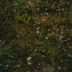 contemporary photography, anne schwalbe, wiese, grass, field, design squish blog