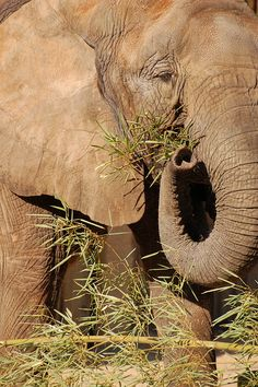 Elephant by † David Gunter, via Flickr