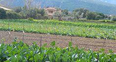 agrotikanew : Αγορά αγροτικής γης, ένα σημαντικό πρόβλημα για το...