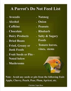 What NOT to feed your parrot