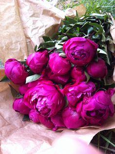 Peonies love flowers! Pink                                                                                                                                                                                 Más