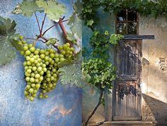 Viñas, uvas, turquesa, madera ;)