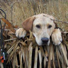 Pic from Ducks Unlimited