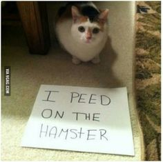 This cat has no consideration for other animals.