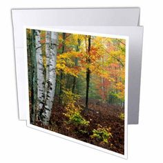 3dRose Michigan, Upper Peninsula. Forest in fog, Autumn - US23 BJA0108 - Jaynes Gallery, Greeting Cards, 6 x 6 inches, set of 6