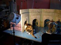 """Lori-Nix, Daisy the cat inside the miniature """"Aquarium"""""""