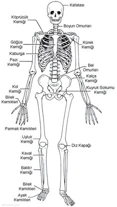 Turkish Lessons, Body Diagram, Medical Surgical Nursing, Learn Turkish, Turkish Language, Face Skin Care, Secondary School, Home Schooling, Study Motivation