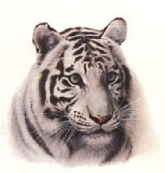 """""""White Tiger"""" head study by Charles Frace"""